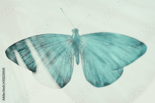 Foto  color tropical butterfly. blurred image.