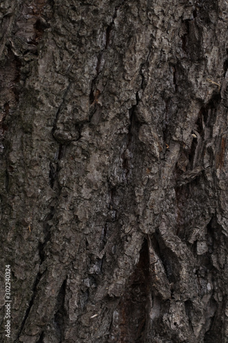 Photo Stands Roe tree bark texture for Wallpaper