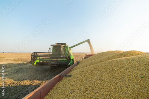 Obraz Pouring soy bean grain - fototapety do salonu