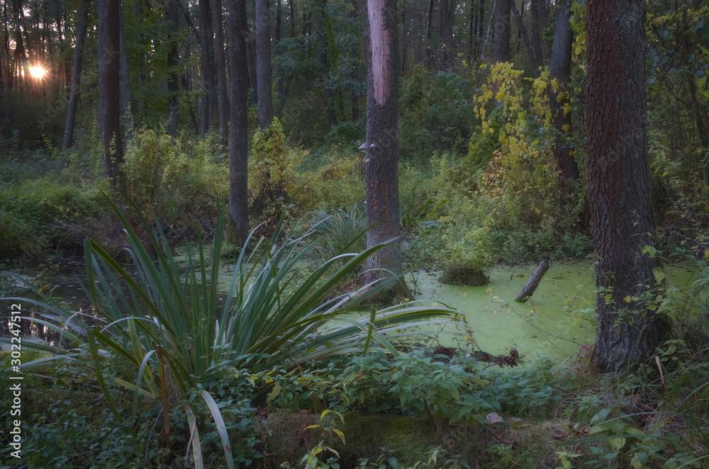 Fototapeta Zachód w lesie
