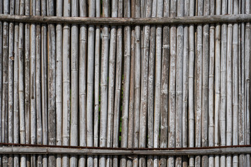 Dry bamboo fence texture or background. Eco natural background concept.