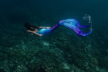 Young Female Free Diver Swims ...