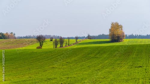 Wzgórza Sokólskie, Piękno ziemi sokólskiej, Jesień na Podlasiu,  - 302269722