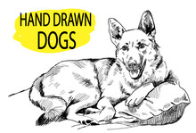 Dog Lying On Pillows. Drawing By Hand In Vintage Style.