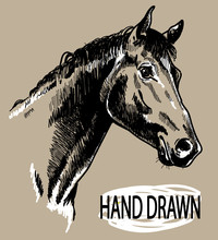 Horse's Head. Drawing By Hand In Vintage Style With Ink Spots.