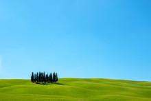 Cypress Trees On Tuscan Landsc...