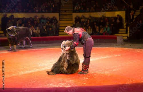 Photo performance of brown bears buffalo in the circus arena.