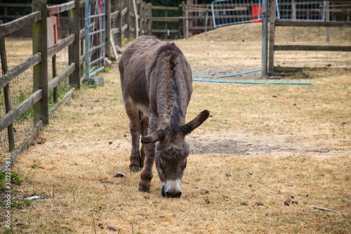 Donkey at Hackney city farm in London Wallpaper Mural