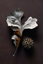 Oak Leaf With Sweet Gum Tree Seed Pod On Brown Background