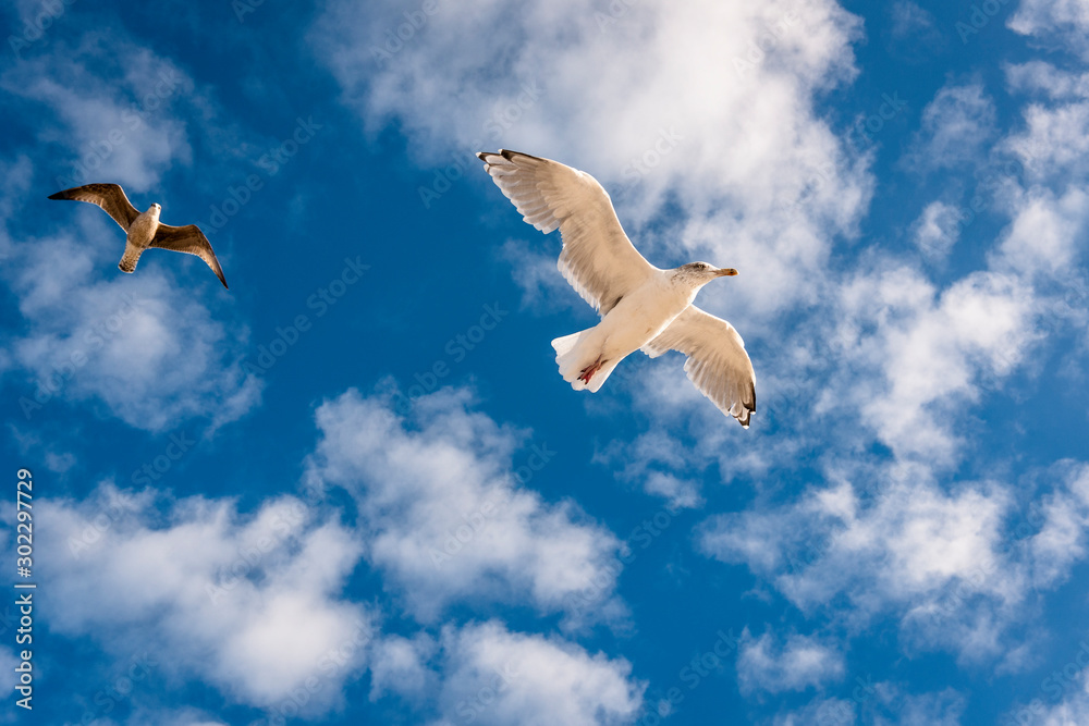 Two seagulls in the sky