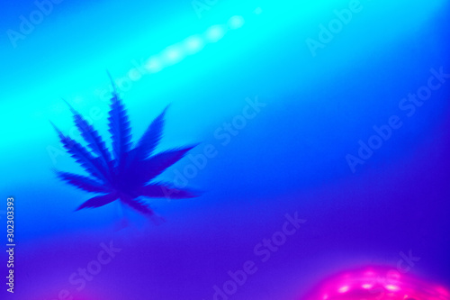 Fototapeta defocused marijuana cannabis leaf in a trendy neon light obraz na płótnie