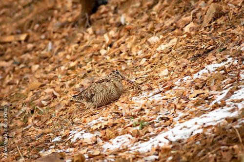 Camouflage bird woodcock Canvas-taulu