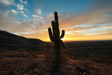 Silhouette Of Growing Cactus I...