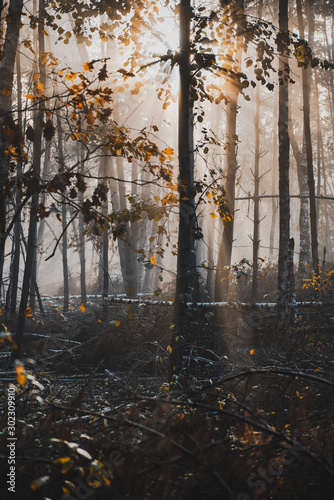 Moody Dark Forest with Sulight Rays and Mist. Desaturated Vintage Effect - 302309910