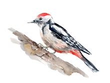Watercolor Drawing Of A Bird -...