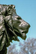 Head Of Lion Sculpture, London
