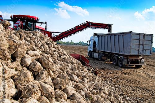 Obraz na plátně  vehicle harvesting sugar beets