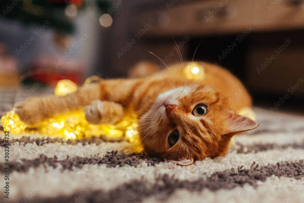 Fototapety, obrazy: Ginger cat playing with garland under Christmas tree. Christmas and New year concept