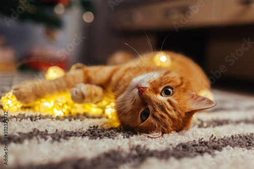 In de dag Kat Ginger cat playing with garland under Christmas tree. Christmas and New year concept