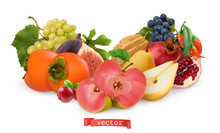 Autumn Fruits And Berries. Pear, Pink Apple, White Sweet Grape And Wine Grape, Fig, Goji Berry, Persimmon Fruit, Pomegranate. 3d Realistic Vector Illustration