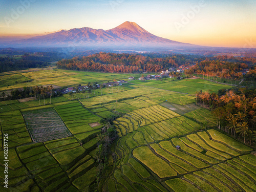 Garden Poster Rice fields Aerial photo of rice terrace field in Indonesia which was taken in the morning / afternoon and dawn / dusk