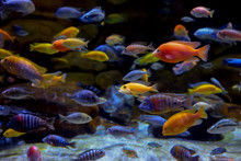 Colorful Marine Life In Large ...