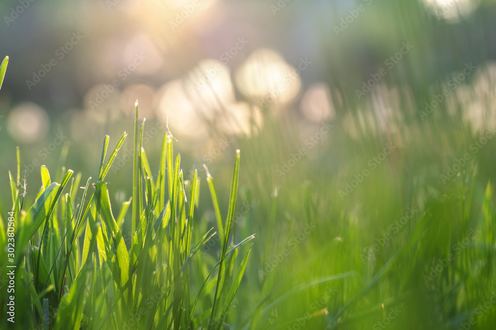 Fototapety, obrazy: Fresh green grass illuminated by sun rays, flares and colorful bokeh on blurred background. Abstract nature background. Blurred backdrop.