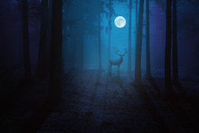 Blue Moonlit Forest