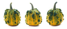 Three Yellow-green Warty Pumpkins Isolated On White. Decorative Plants, Autumn Harvest