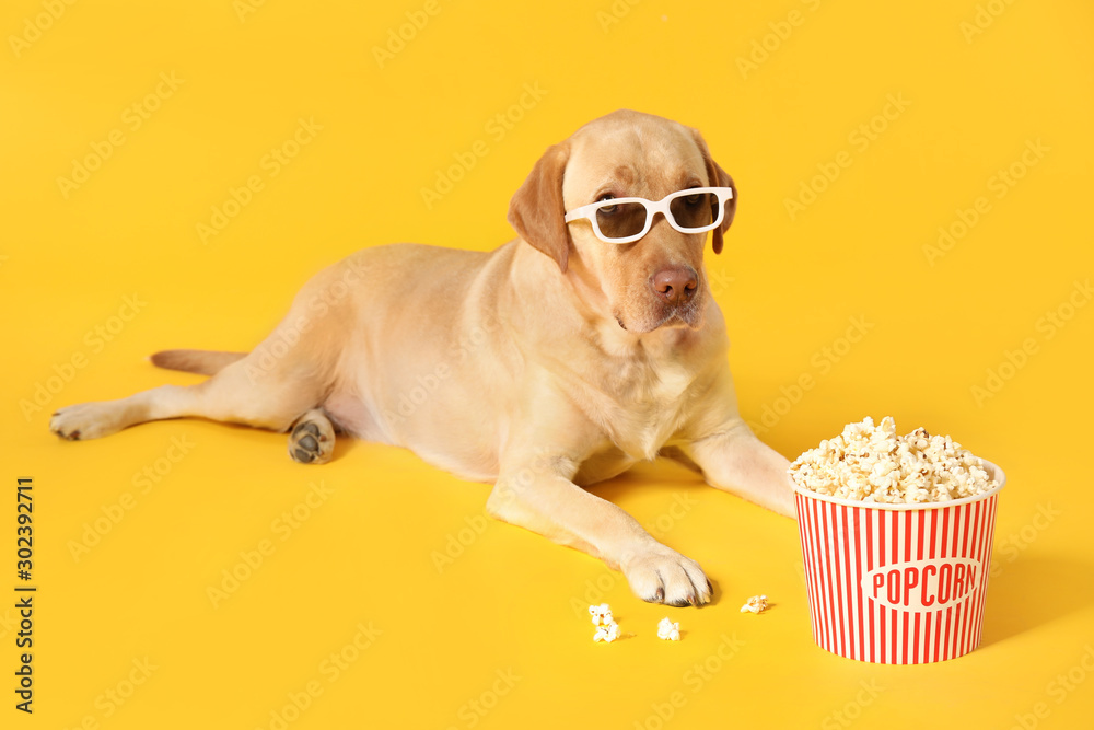 Fototapeta Adorable dog with bucket of popcorn and 3d glasses on color background