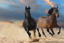 Two Horses On The Beach, Black...
