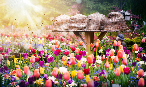 Bee hives or houses in beautiful tulips garden. Close up of flying bees and sun light background. - 302396911