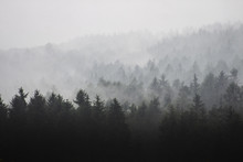 Fog In Forest, Early Morning Above Trees Rainy Weather