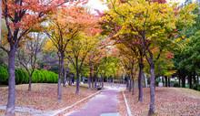 작은 공원의 아름다운 ...