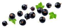 Black Currant On White Background With Clipping Path