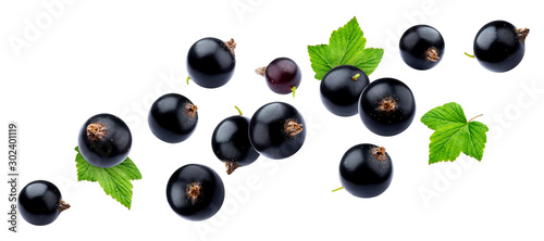 obraz lub plakat Black currant on white background with clipping path