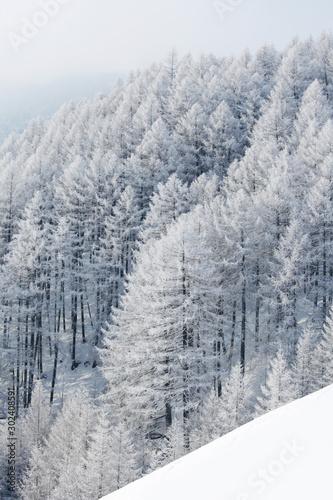 Photo sur Aluminium Blanc Winter landscape with forest