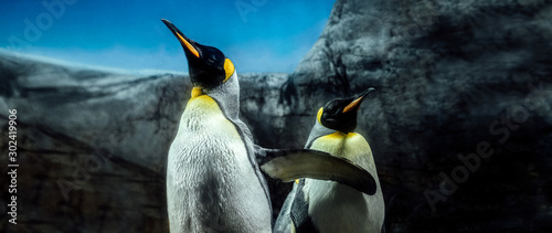 Group of king penguins on South Georgia Island Antarctica, sky and ice mountain Wallpaper Mural