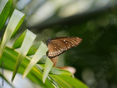 Beautiful close up of a small brown butterfly