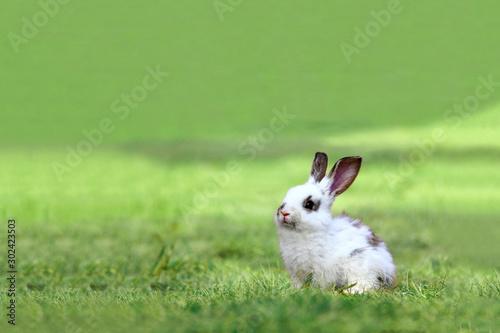 草原の中の1匹の子ウサギ Wallpaper Mural