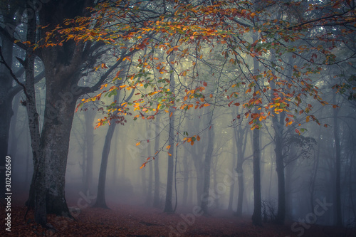 Canfaito enchanted forest in the autumn season with fog at early morning