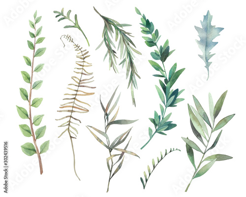 Fotomural  Watercolor plants set