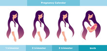 Pregnancy Calendar. A Pregnant Woman In The 1st, 2nd, 3rd Trimester Of Pregnancy And With A Newborn In Her Arms. Info Graphic With A Cute Girl. Flat Stock Vector Illustration