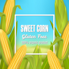 Sweet Corn Vector Poster, Labe...