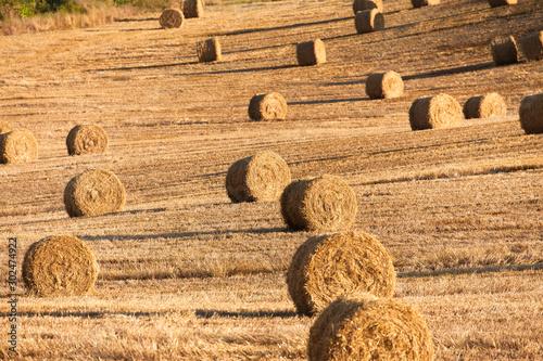 Fényképezés Moisson dans les champs