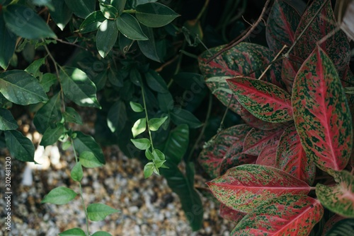 Greenery tropical  garden flay lay view