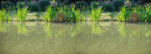 Baner Green Pond With Plants. ...