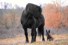 Dog And Horse In Autumn Forest