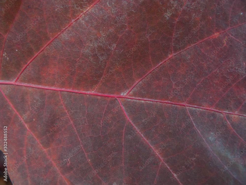 Fototapeta Jesienny liść.