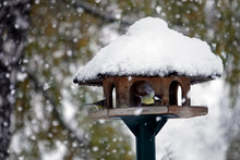 Songbirds On A Birdhouse In Winter With Snow Falling